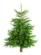 Natural little christmas tree without ornaments Stock Photos