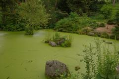 Algae coverd pond Stock Photos