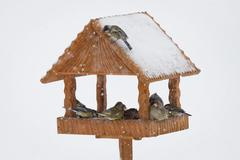feeding birds in winter time - stock photo