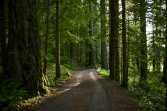 Summer forest road Stock Photos