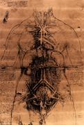 Anatomy art Stock Illustration