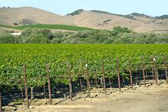 Organic vineyards in california, usa Stock Photos
