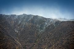 Palava metsä - Kalifornia mäet Kuvituskuvat