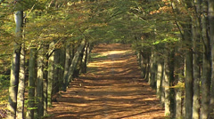 Autumn foliage splendour on a beech avenue in Dutch forest  - high angle Stock Footage