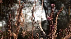 Spider webs in meadow Stock Footage
