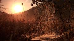Spyder web on meadow Stock Footage