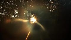 Sunrise through the trees Stock Footage