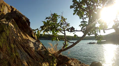 Tree over stone,background sun and sea coast Stock Footage