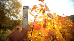 Vineyard Stock Footage
