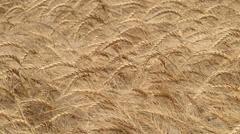 Waving Wheat Field Slo Mo I Stock Footage