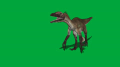 Utahraptor FS Walking - stock footage