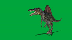 Spinosaurus Walking Forward Attack Stock Footage