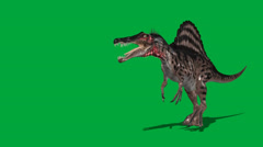 Spinosaurus 2  Walking Forward Attack Stock Footage