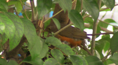 Robin's Nest 5 Stock Footage