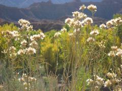 Zion Canyon UT - Flowers mountain background Stock Photos