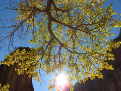 Zion Canyon UT - Tree sunlight rocks Stock Photos