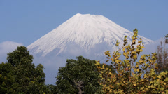 Stock Video Footage of Mount Fuji and Trees