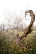 Scary photo of a tree Stock Photos