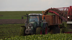 Sugar beet harvest 2 Stock Footage