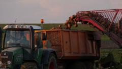 Sugar beet harvest 3 Stock Footage