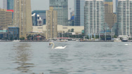 Stock Video Footage of Close up of a swan in Lake Ontario