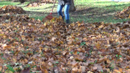 Stock Video Footage of gardener rake autumn leaf
