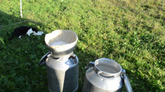 Steel cans full of fresh natural cow milk and cat pet lap bowl Stock Footage