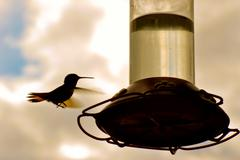 Hummingbird approaches feeder Stock Photos