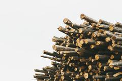 Cut timber logs in a forest - stock photo