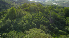 Aerial view mountain valleys and coniferous forest, USA Stock Footage