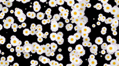 Daisy Screen Fill Stock Footage