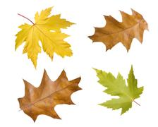 Leaves, fall Stock Photos