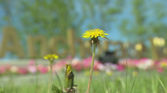 Anchorage Sign, rack to Dandelion Stock Footage