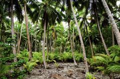 south pacific rain forest jungle - stock photo