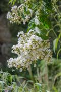 close up of white blossoming - stock photo