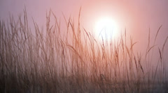 Winter grass with sun Stock Footage