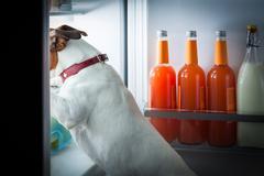 midnight hungry dog - stock photo