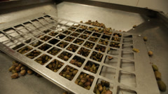 Olives Being Processed for Making Olive Oil Stock Video Stock Footage