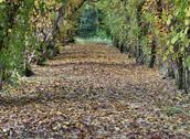 Stock Photo of tunnel of leaves with a small road to infinity in november