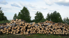 Panorama of firewood fuel birch and pine logs stacks near forest Stock Footage