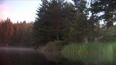 Huge pine trees in lake Stock Footage