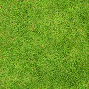 fresh green grass top view - stock photo