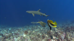 Sharks and fish - stock footage