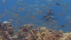 SCUBA Diver tropical fish Stock Footage