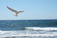 A beautiful seagul Stock Photos