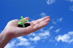 Hand plant grow Stock Photos