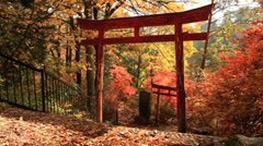 Torii on the background of autumn leaves. Stock Footage