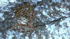 Dangerous Hornets Nest Dolly Stock Footage