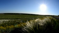 Stock Video Footage of Feather-grass grass on a background a sun