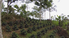 Flying rapidly through a shade-grown organic coffee plantation - stock footage